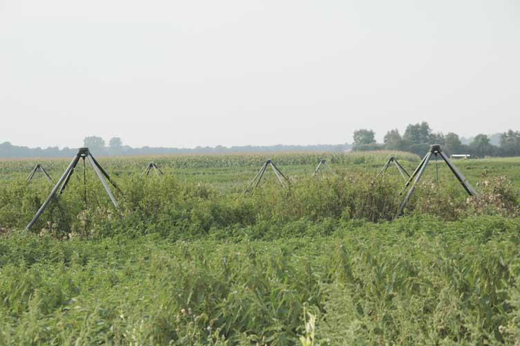 The antennas in the field covered by weeds (credit Urijan Poerink).