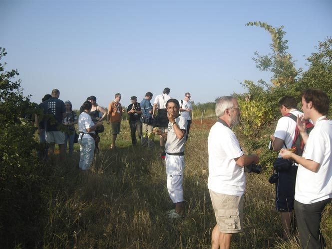 In the vineyards of the observatory, in front from l.to r. Mihail Robescu, Jürgen Rendtel, Paul Roggemans (back) and Cis Verbeeck (credit Mihail Robescu).