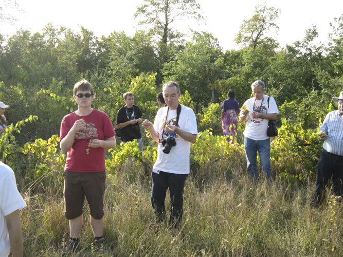 In the vineyards with Geert Barentsen, Tom Roelandts and Damir Šegon (credit Casper ter Kuile).